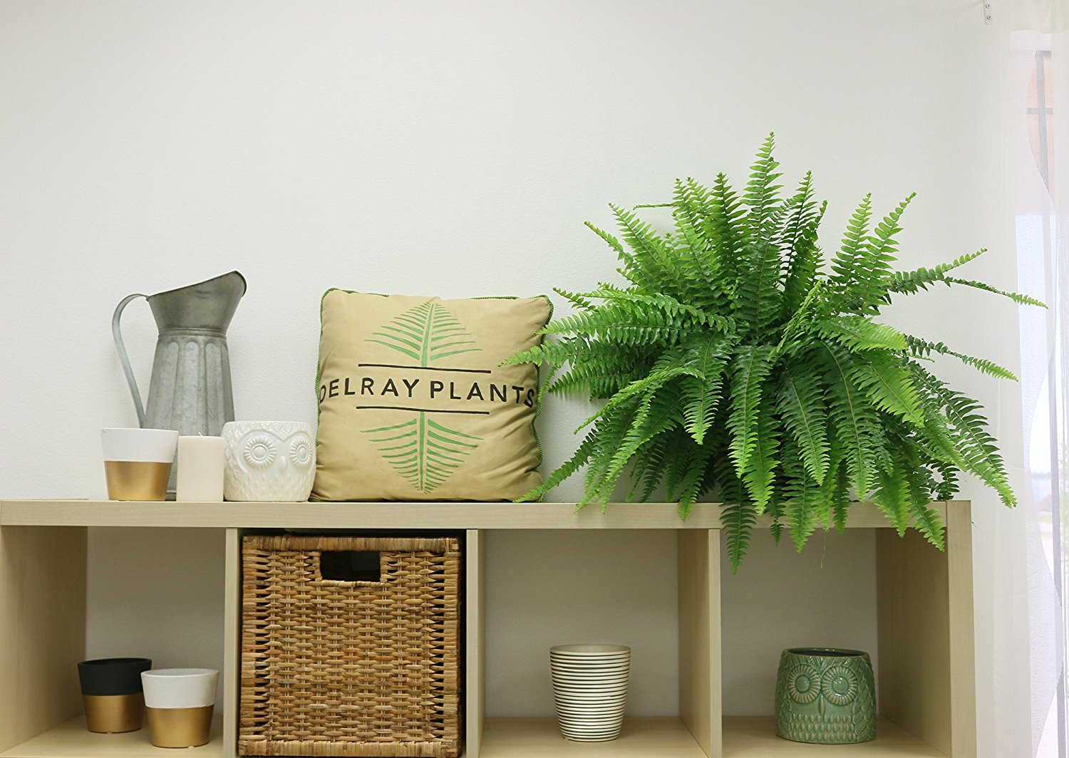 18 must have house plants that will clean and purify your for Best air purifying plants for bedroom