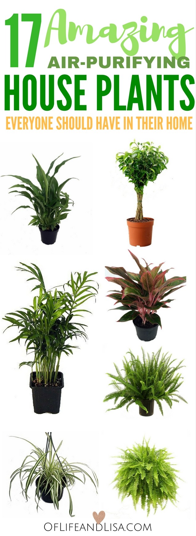 Air Purifying Plants For Bedroom: Purifying-house-plants